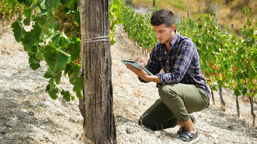 phd in viticulture enology
