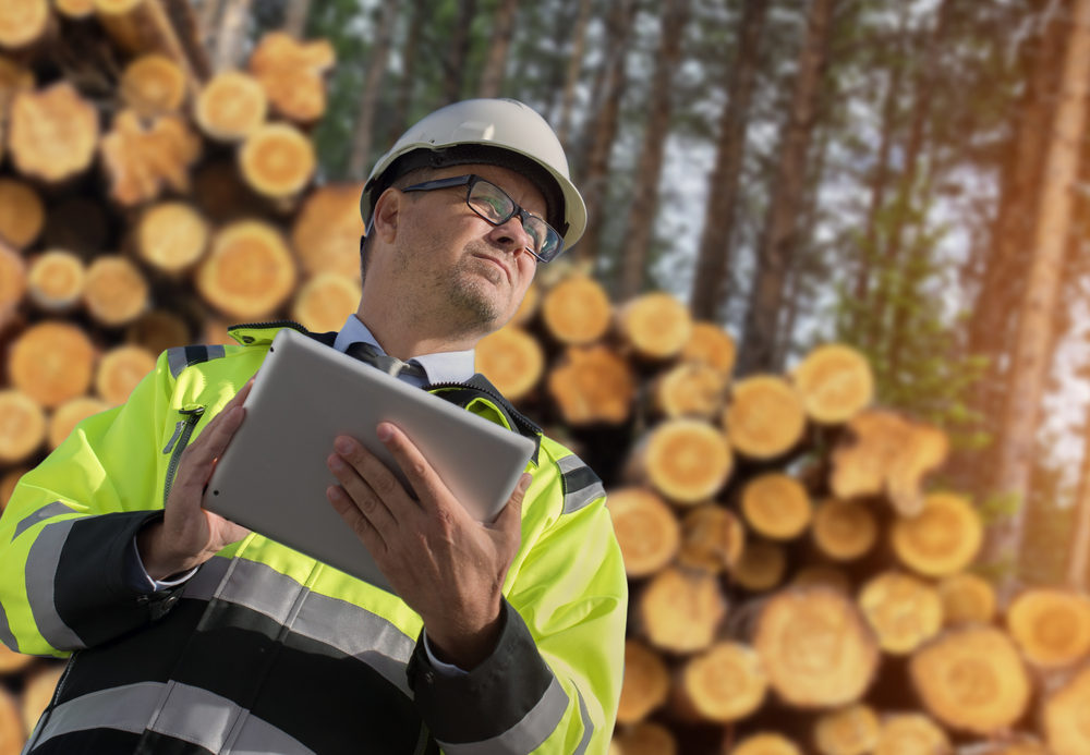 forestry careers